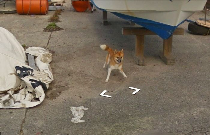 Hilarious chase ensues as tiny dog chases Google Street View car in Kagoshima (8 pics)