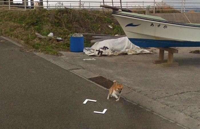 Hilarious chase ensues as tiny dog chases Google Street View car in Kagoshima (8 pics)