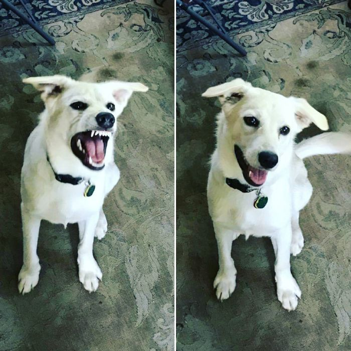 Before And After Being Called a Good Boy (16 pics)