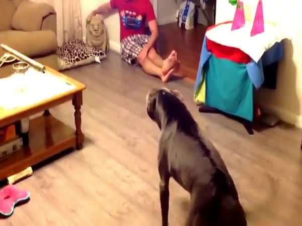 Dogs Scared of a Toy