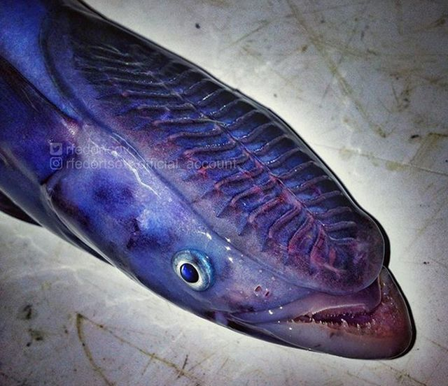 Photos Of Rare And Strange Fishes Posted By A Russian Fisherman (23 pics)