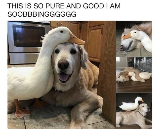 Funny Memes (61 pics)