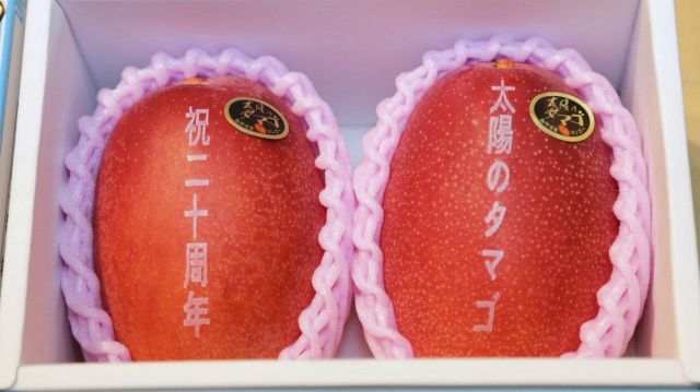 A Pair Of These Premium Mangoes Sells for 400,000 Yen ($3,730) In Japan (3 pics)