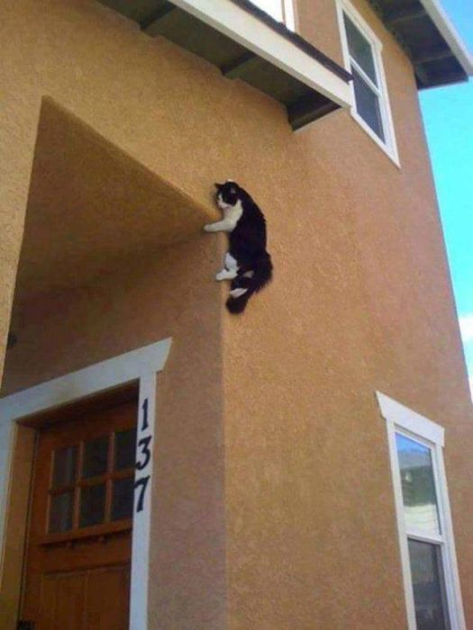 Cats In Troubles (33 pics)