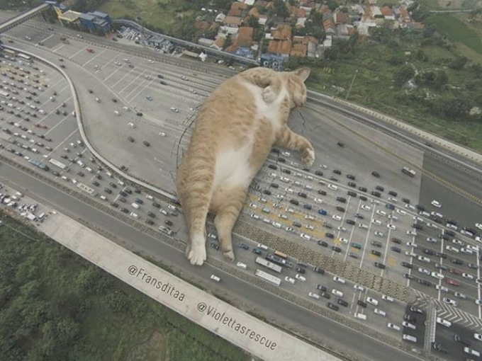 Giant Cats In Urban Landscapes (5 pics)