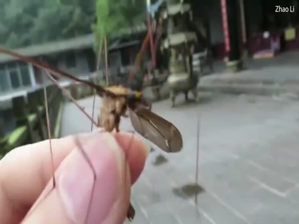 Man From China Catches World's Largest Mosquito
