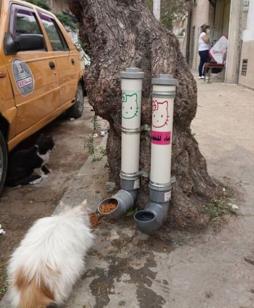 Street Feeders And Drinking Bowls For Cats In Damascus (4 pics)