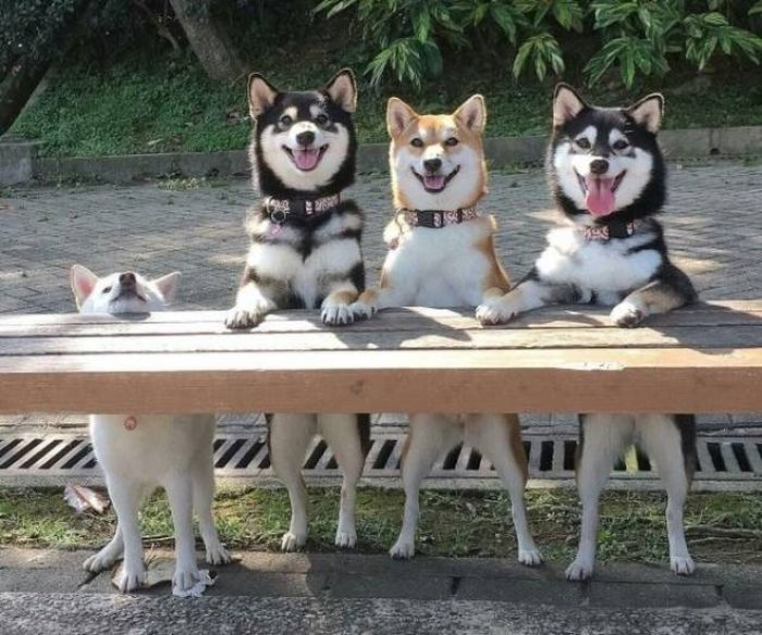 Funny Dogs (53 pics)