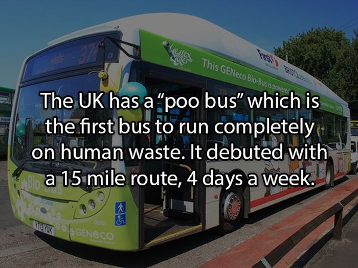 Facts About Poop (19 pics)