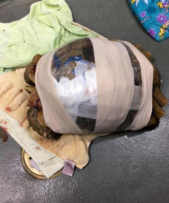 Tortoise Repair (6 pics)