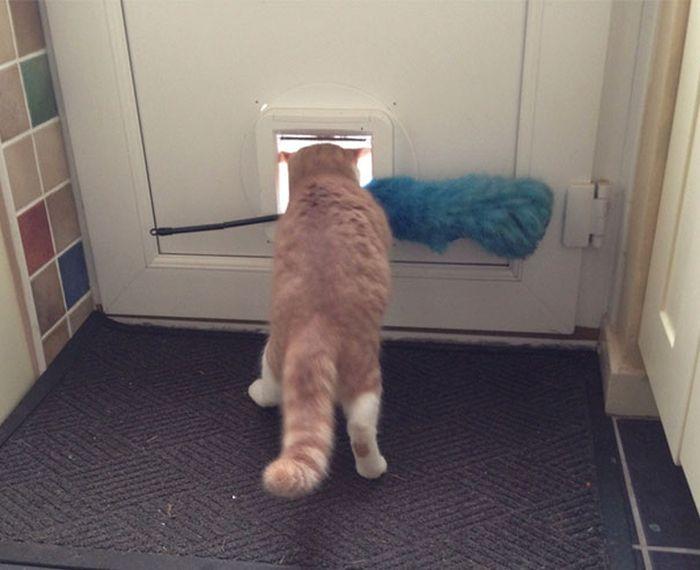 Funny Cats (25 pics)