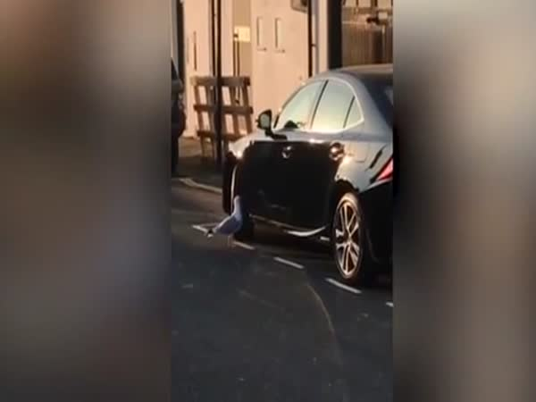 Hilarious Moment Seagull Attacks Own Reflection in Car