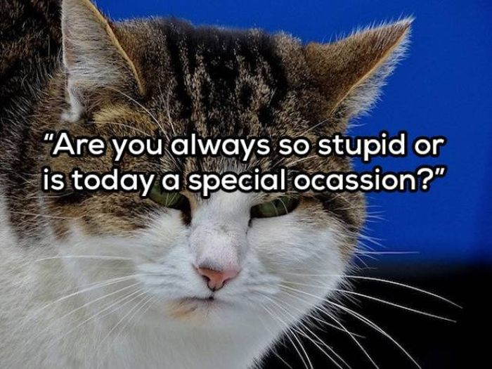 Your Daily Dose Of Sarcasm (21 pics)