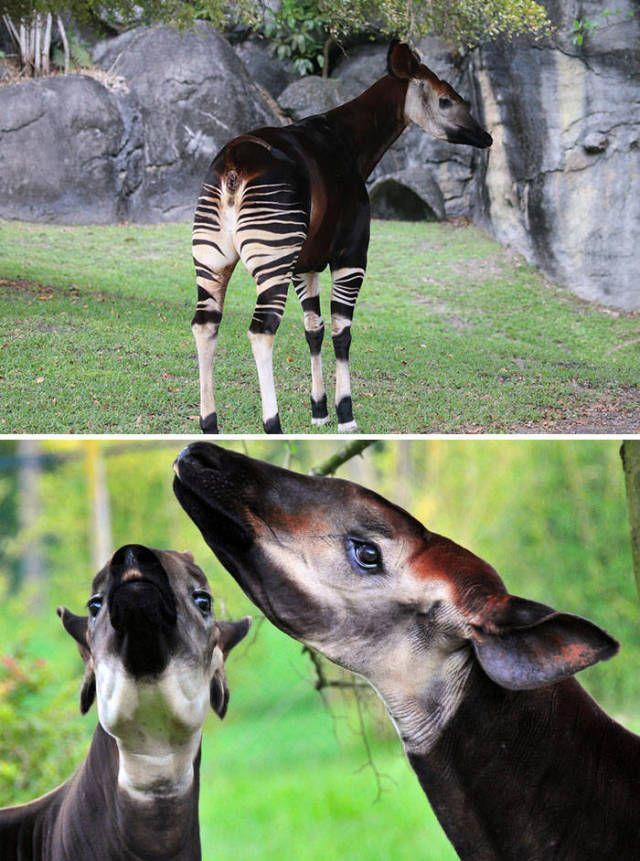 Unbelievable Animals (40 pics)