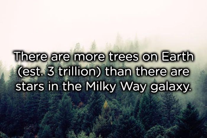 These Facts Are Awesome (25 pics)