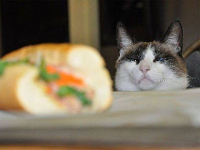 Cats Caught Stealing (33 pics)
