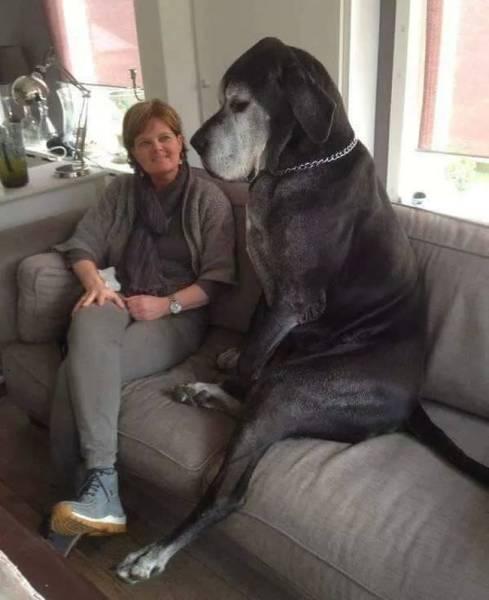 Pets And Humans (29 pics)