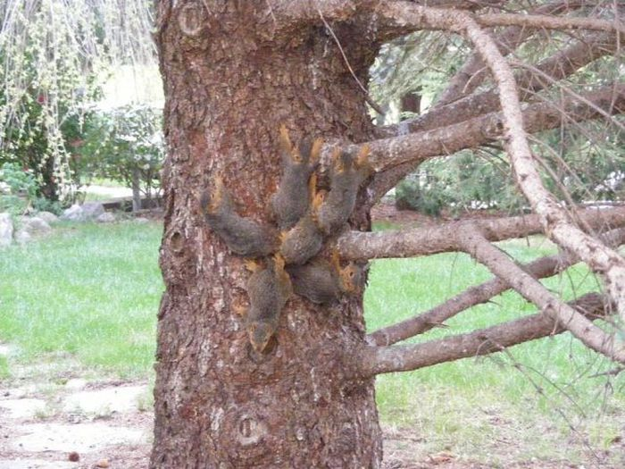 People Rescue 6 Squirrels Stuck In A Jam After Getting Their Tails Tangled (2 pics)