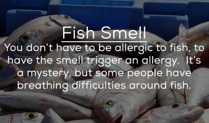 People Can Be Allergic To Anything (14 pics)