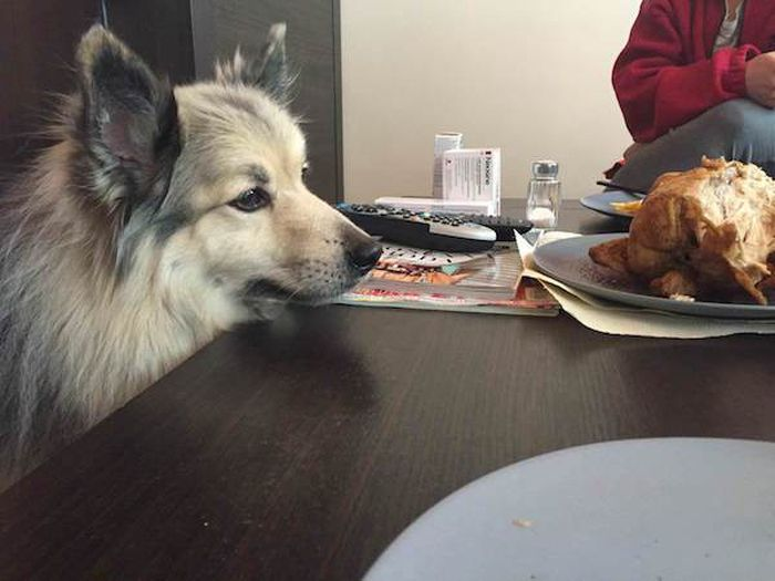 The Way Pets Look At Food... (23 pics)