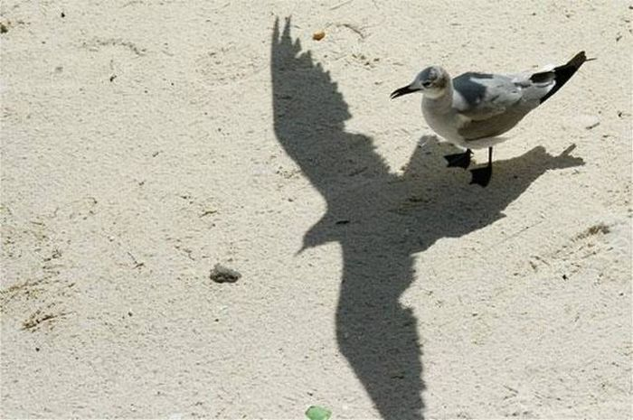 Interesting Shadows (22 pics)