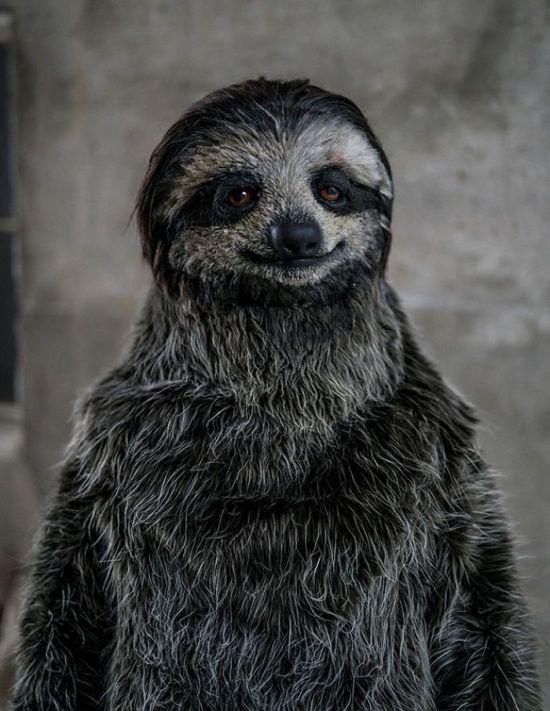 Sloth Suit (4 pics)