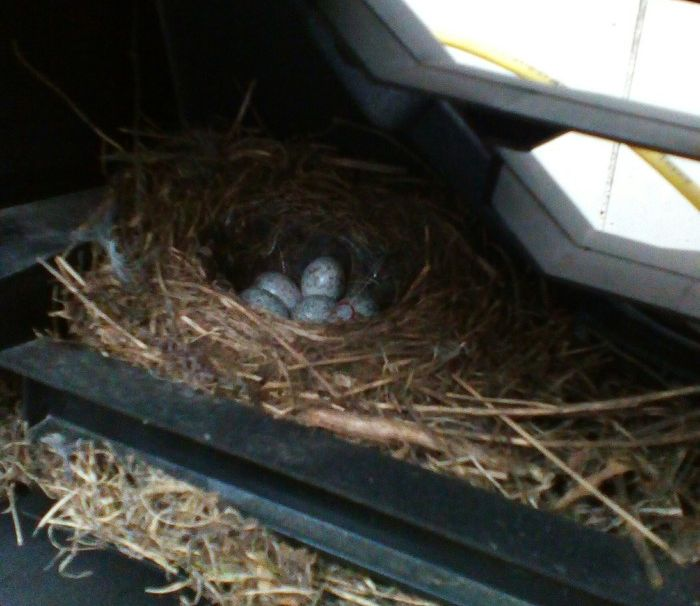 There Is A Little Surprise In The Car (4 pics)