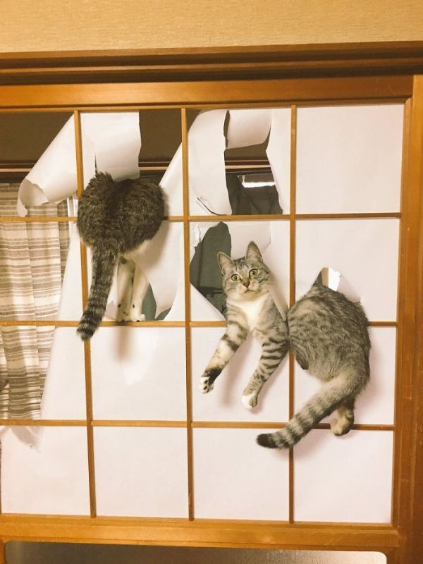 Cats Got Caught (20 pics)
