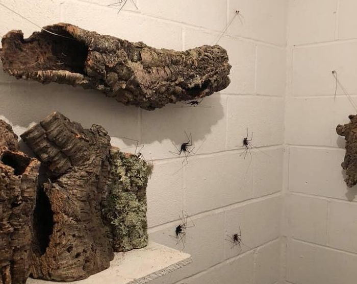Scary Bathroom Decor (5 pics)