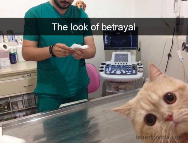 Cats On Snapchat (40 pics)