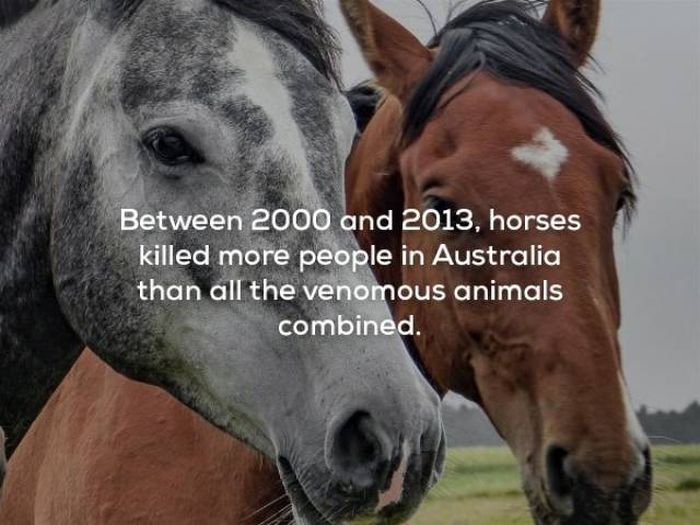 Scary Facts (29 pics)