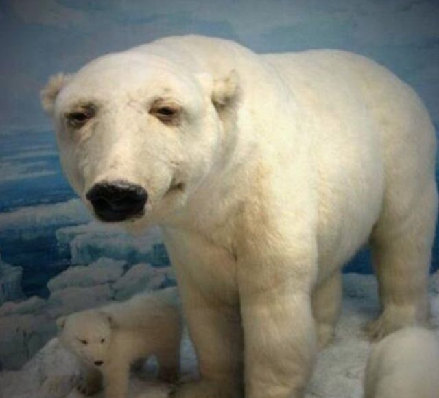Taxidermy Fails (28 pics)