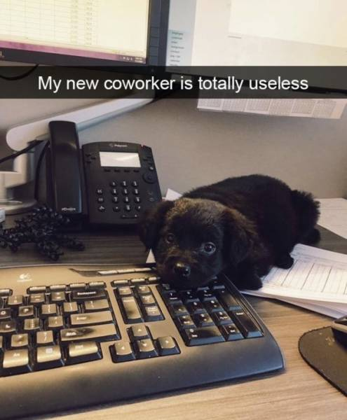 Work Memes And Fails (51 pics)