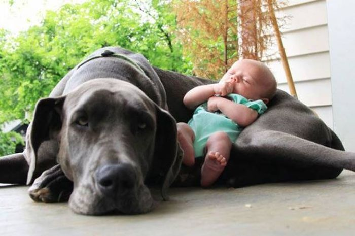 When A Picture Says More Than Just A Thousand Words (52 pics)