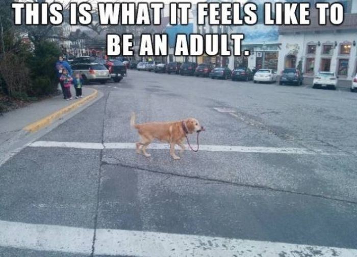 Being Adult Is Hard (26 pics)
