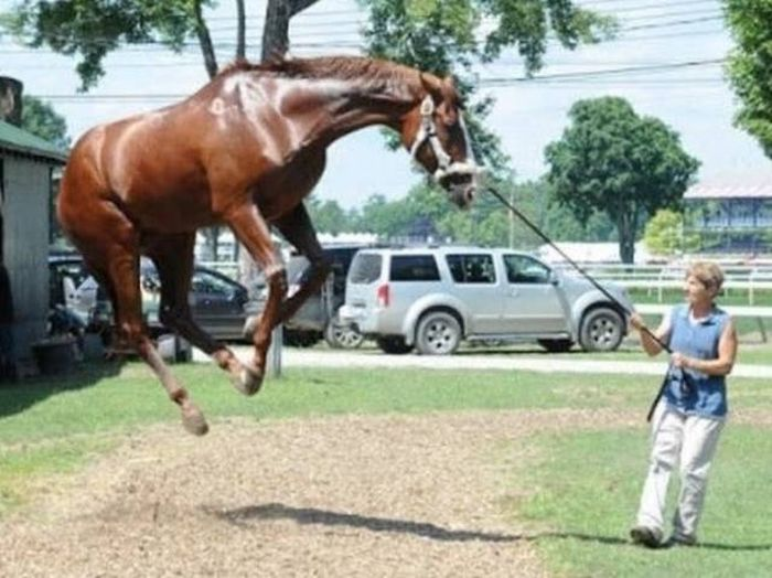 Photos Caught at Exactly the Right Moment (57 pics)