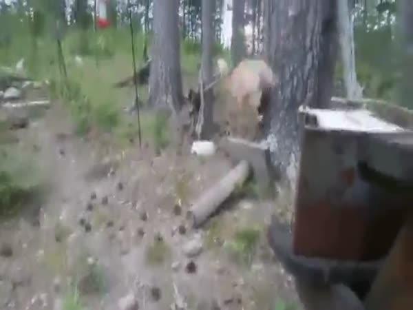 Brave Cat Attacks Bear