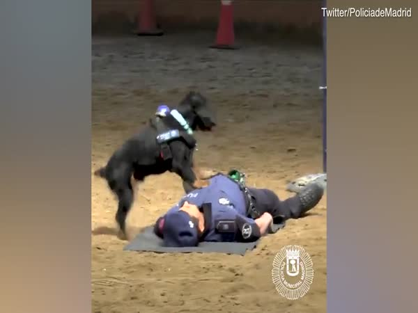 Police Dog Performs CPR To 'Save Her Handlers Life'