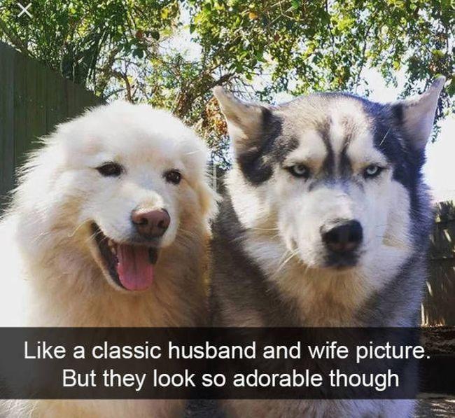 Snapchat Dogs (38 pics)