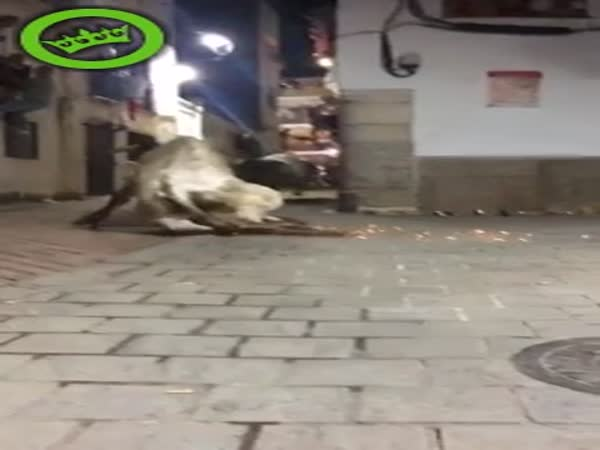 Bull Crashes Into a Wall Trying to Attack People