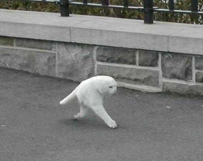 Google Street View Moments (18 pics)