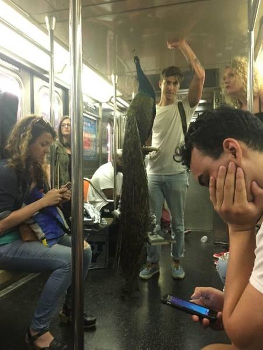 You Can See Almost Anything On Subway (43 pics)