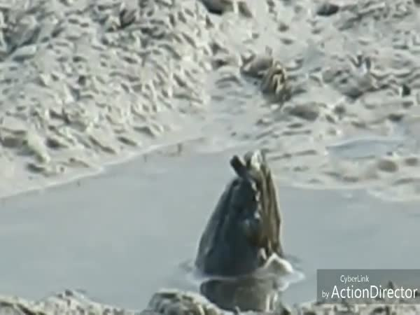 Mystery Creature Rising Out Of The Mud Will Baffle You