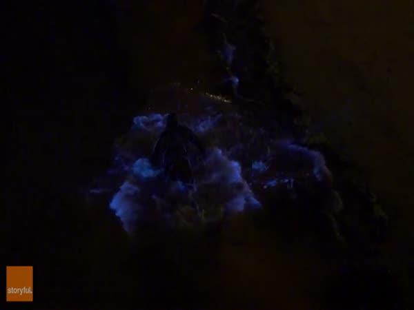 Bioluminescent Sea Algae Creates A Beautiful Effect
