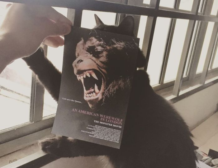 Cats Inserted Behind Famous Movie Posters (19 pics)