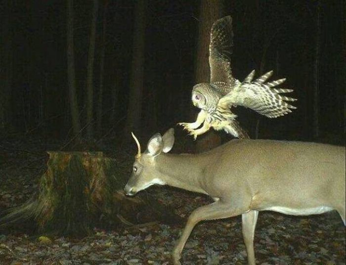 Interesting Shots By Trail Cams (31 pics)