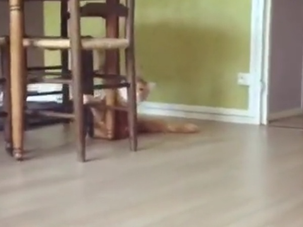 Playing Hide And Seek With Cat