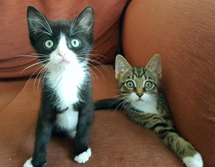 Kittens With Two Paws (6 pics)