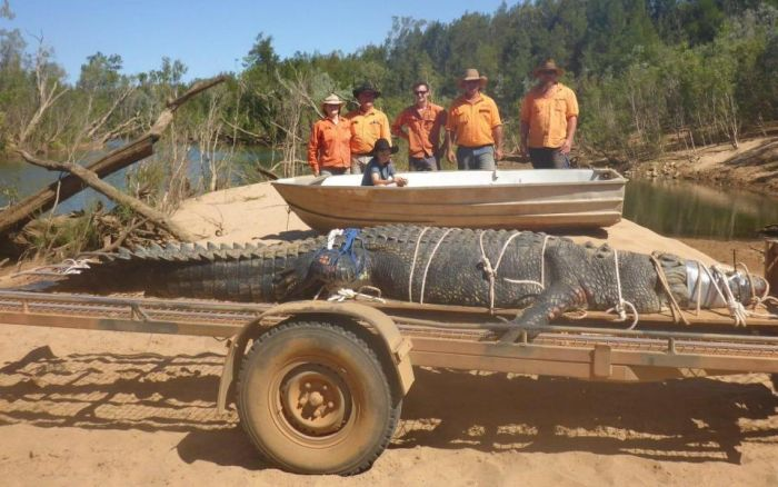 60-Year-Old Crocodile Caught In Australia (3 pics)