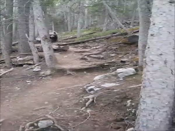 Massive Grizzly Makes It Clear To Hikers That Nature Is In Charge